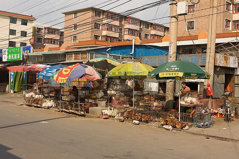 Sprzedawca drobiu, Hohhot, Chiny