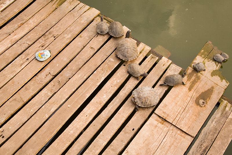 Żółwie z Yuantong Si, Kunming, Chiny