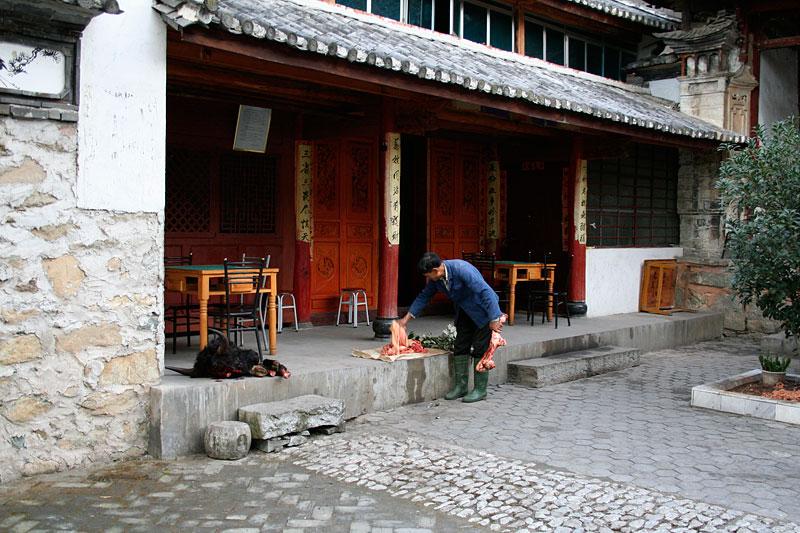 Łeb wołu w świątyni