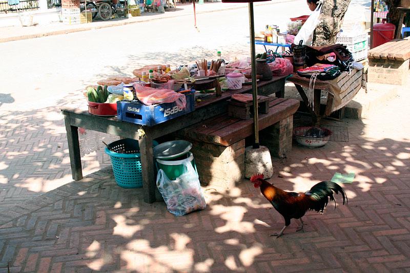 Bezpański kogut? Luang Prabang, Laos